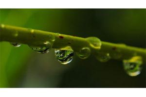 Récupération eau de pluie pour WC : une idée à suivre