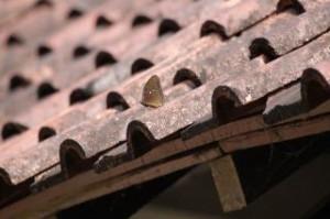 La toiture : un poste onéreux mais essentiel