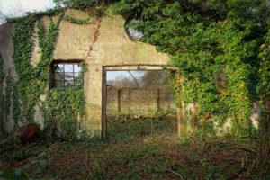 Pourquoi opter pour une toiture végétalisée ? Tous les conseils.
